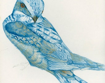 Fine Art Bird Print from Original Drawing Blue Blue Bird