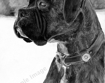 Boxer B&W - Boxer Dog LARGE A4 A3 or A2 Limited Edition Art Print of original pencil drawing by English artist Steve Russell of RussellArt