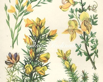 Vintage Botanical Print Antique FLOWERS, plant print botanical print, bookplate 19 art print, yellow plants plant wall