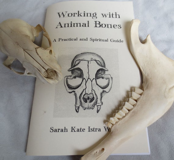 Working with Animal Bones - Booklet