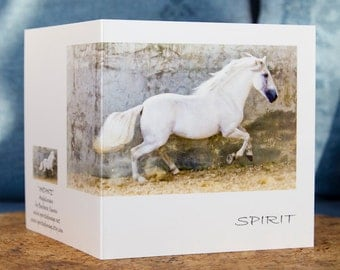 ANDANTE, Andalusian horse, Art Card, Horse Greeting card, Equine photography,
