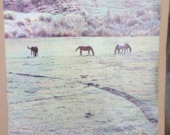 "Vtg 1973 ""Tranquility"" Poster - by Poster Originals Inc. - Mark Fraizer Photo"