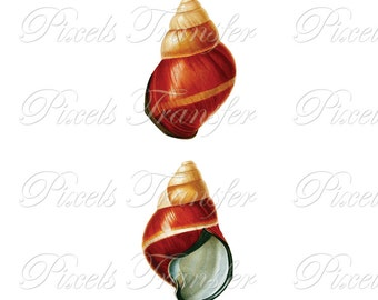 SEASHELL set Instant Download Digital Downloads printable shells,red seashell clipart illustration 290
