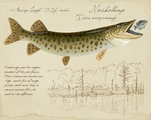 Musky - Muskellunge- 9x12 inch limited edition print by Matt Patterson, fishing art, cabin decor