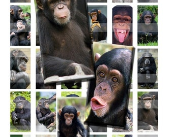 Chimpanzee Chimp Monkey Baby Wild Zoo Animal Digital Images Collage Sheet 1x2 inch Rectangles Domino Commercial INSTANT Download RD25