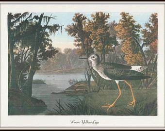 Audubon Bird Art Print, Lesser Yellow-Legs, 1970s Vintage Lithograph, Nature Illustration, 19th Century Art, Wall Art, Home Decor
