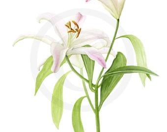 """Stargazer Lily Watercolor 9"""" x 12"""" Print"""