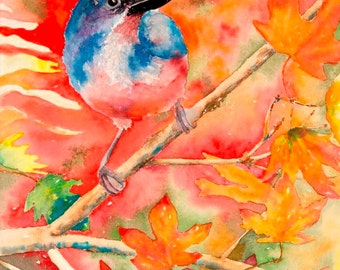 Scrub Jay 8x10 Giclee Print