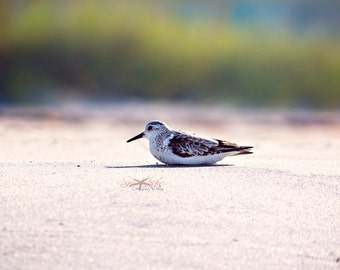 "Beach Photography, Shorebird Seascape Photograph, Summer Wall Art, Beach Decor, Shore Birds, ""Relax"""
