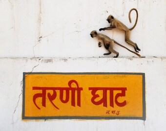 Monkeys from India Art Photography