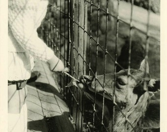 "Vintage Photo ""Feeding Little Friends"" Animal Deer Snapshot Photo Old Antique Photo Black & White Photograph Found Photo Paper Ephemera - 12"