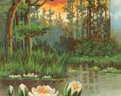 Antique SCENIC  WATERLILY Pond Sunset #1 Postcard -  INSTANT Digital download - trees birds marsh