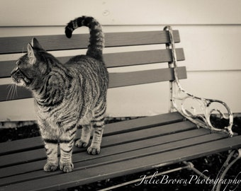 Black and White Cat Photography Bench Photography Home Decor Wall Hanging 5x7 8x10 11x14