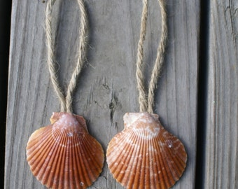 Seashell ornament,  sea shell favor,  eco friendly, natural,  country wedding,