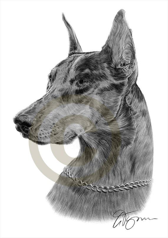 Matita di doberman pinscher cane disegno opera di formato a4 for Cane disegno facile