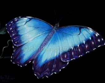 Butterfly painting, butterfly picture, butterfly print from my original pastel painting of a Blue Morpho butterfly.