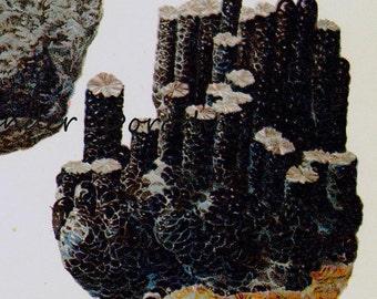 Manganite Pyrousite Psilomelene  Stone Mineral Vintage Lithograph Edwardian Geology Print To Frame 15