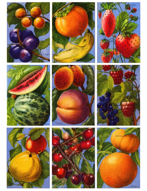 vintage french fruit labels, beautiful illustrations, adigital collage sheet  no.126