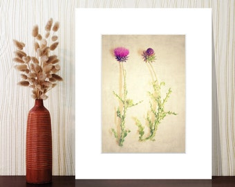 50% OFF SALE, matted photograph, thistles, pink, large wall art, large art, rustic decor, farmhouse decor, farmhouse art, farmhouse chic