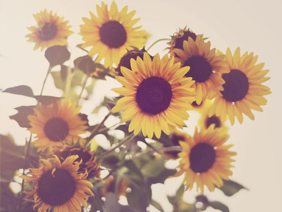 Items similar to Sunflower Photograph, Kitchen Decor ...