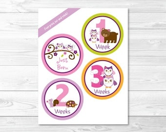 Girl Owl Forest Animal Monthly Milestone Stickers / Woodland Baby Shower / Owl Baby Shower / Iron Ons / Printable Stickers INSTANT DOWNLOAD