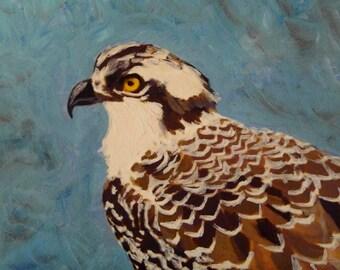 Osprey bird portrait - Last one to leave the nest.  Original osprey oil painting by Vivienne Strauss.