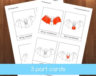 Montessori Parts of Bat 3 part cards