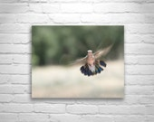 Hummingbird Photo, Bird Art Print, Summer, Bird in Flight, Green, Peridot, Hummingbird Print, Bird Photography, 8x10, 11x14, 16x20