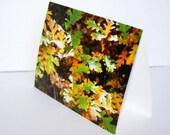 SALE - Oak Leaves in Fall - BLANK 4x6 Photo NoteCard