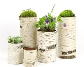 Sale, Collection of 5 birch bark vases/candle holders