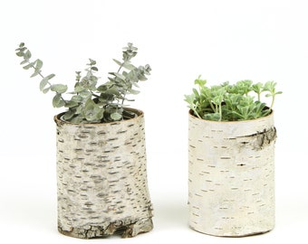 Two small birch bark vases with free engraving, Natural