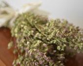 Santa cruz oregano, dried herbs,  pink dried flowers, purple dried flowers,  wedding decor