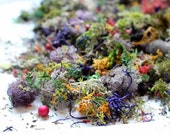 NEW Lichen Confetti-3 oz sandwich bag full-Preserved Reindeer moss in over 8 colors with berries-pine needles & More