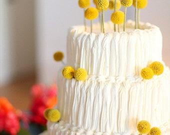 20 craspedia-dried naturally-Long stem-Craspedia-Billy Balls-Billy Buttons-Dried Yellow Wedding Flowers-Bundle of 20