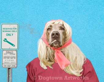 Working Girl, large original photograph of Weimaraner wearing clothes and getting ready for work