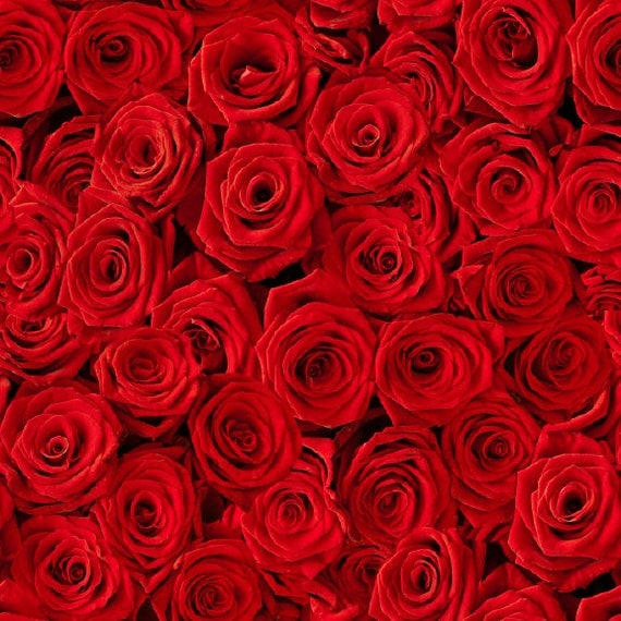 Bright Red Roses Removable Wallpaper 8 Feet
