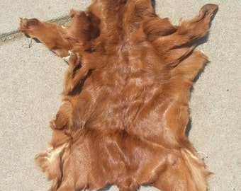 Red Brown Goat Kid- Craft Quality- Dry Tanned Lot No. 0716-B