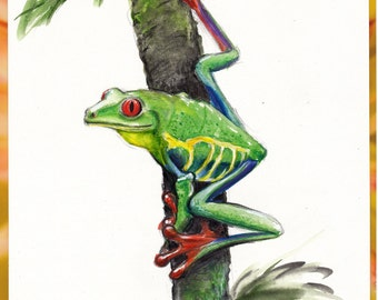 Red-Eyed Tree Frog  -  Original watercolor painting of a Red-Eyed Tree Frog from Costa Rica