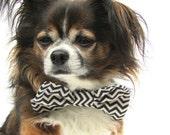 Pet Dog Bow Tie-Clip on Navy blue and Cream Chevron