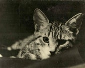 "VINTAGE Adorable Cat picture in Black & White Photo of ""Squeaky"" Tabby Kitten"