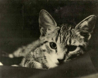 """VINTAGE Adorable Cat picture in Black & White Photo of """"Squeaky"""" Tabby Kitten"""