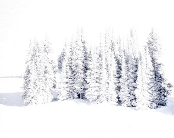 Winter Colorado Pines Snow Frozen Icy Snowy White Trees Forest Cabin Rustic Lodge Photograph