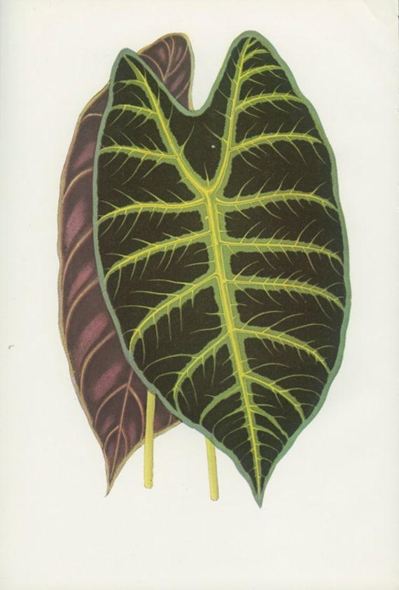 African Mask Plant Leaf Print African Mask