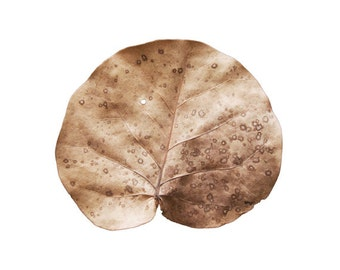 Golden Leaf 8x10. Fine Art Photographic Natural History Print. Minimal simple style. Natural Home Decor. Kitchen