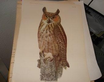1936 Owl Print     Plate 57 an 58