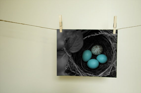 Bird Nest Black and White Nature Photography Home Decor Wall Decor Animal Photograph Fine Art Nature Print