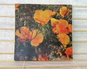 """Springtime Golden Poppies, California - 7""""x7"""" Square Distressed Photo Transfer on Wood"""