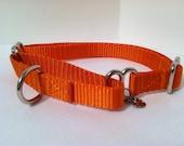 Petite orange 1/2  inch Martingale