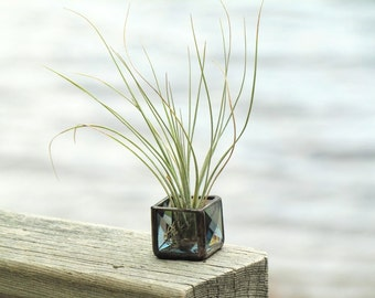 Mini Air Plant Holder Gray Beveled Stained Glass Terrarium Cubed Grey Glass Box Planter