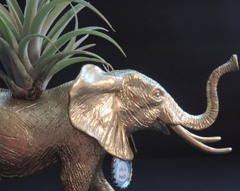Large gold elephant planter with large air plant and custom tag.